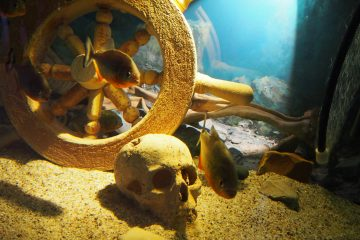 Живые Акулы